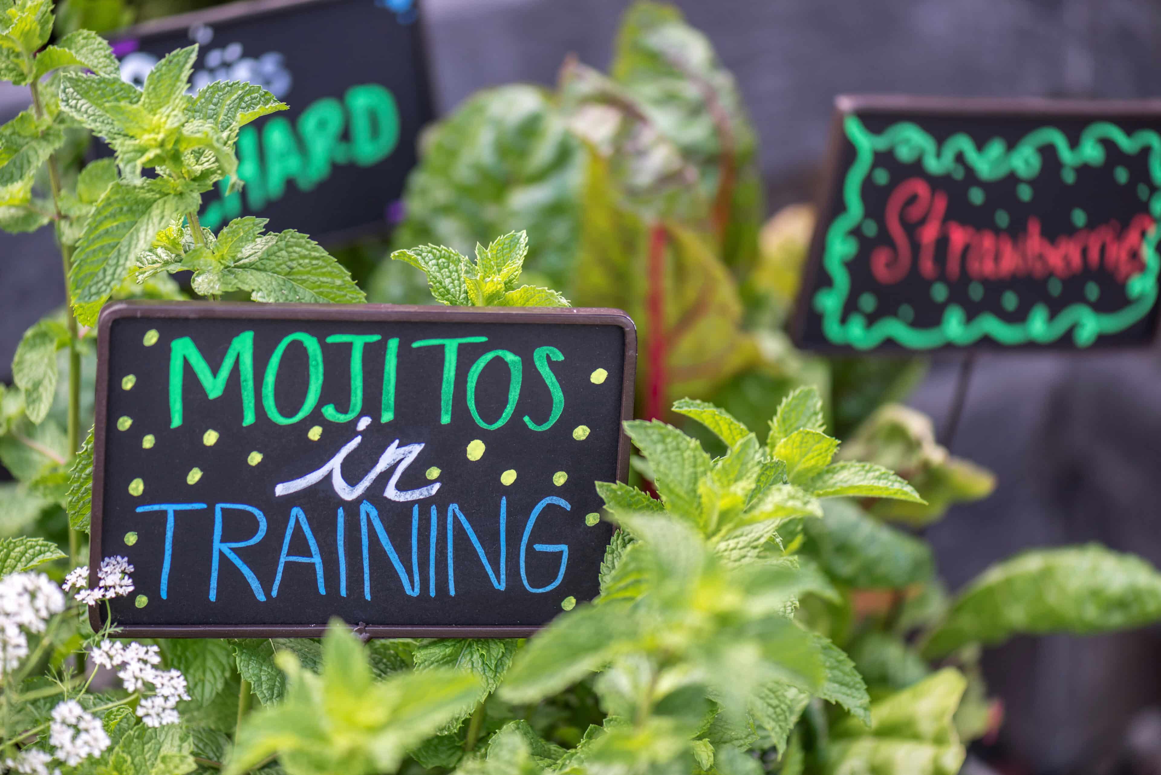 Mojitos in Training
