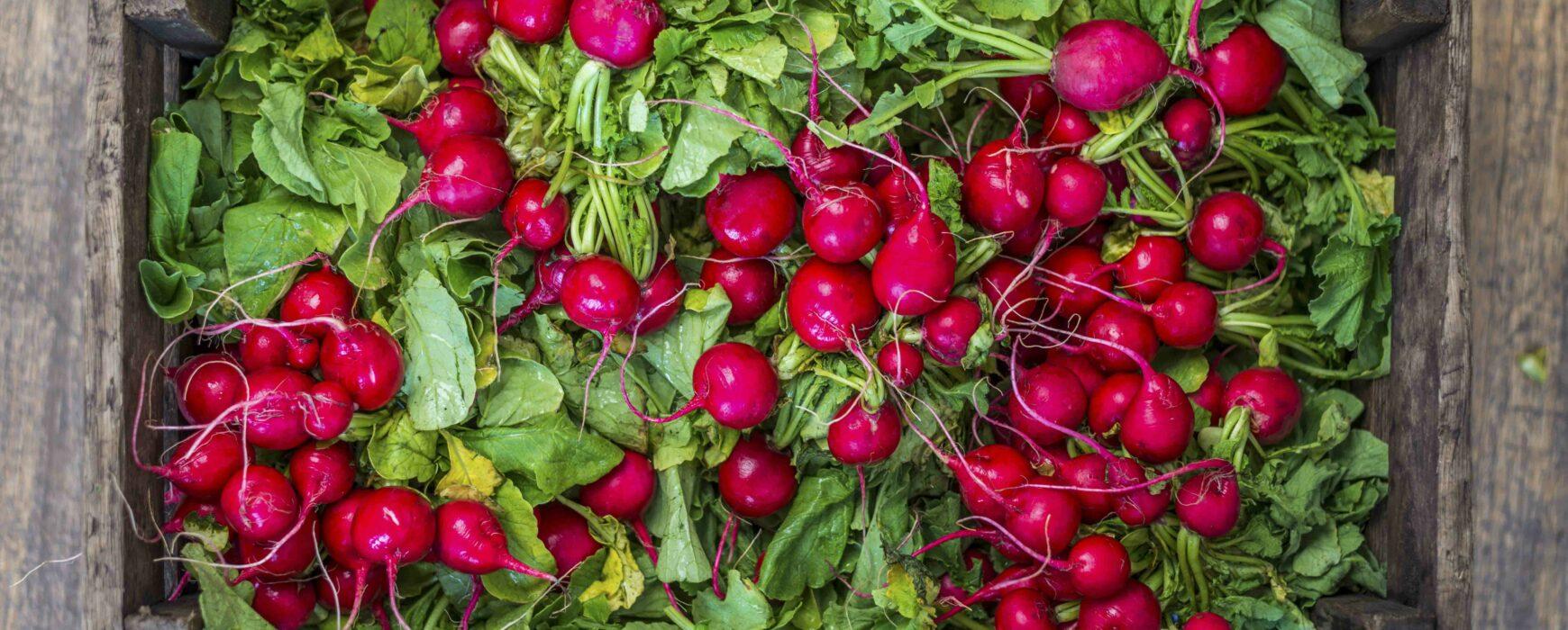Large wooden box of radishes